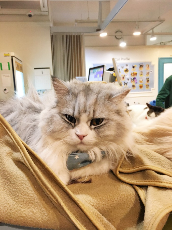 Cat Cafe Myeongdong